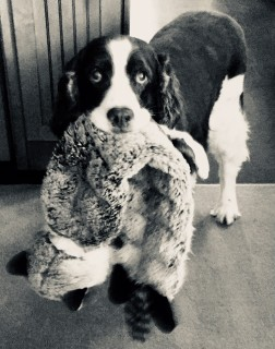 Duke and Toy
